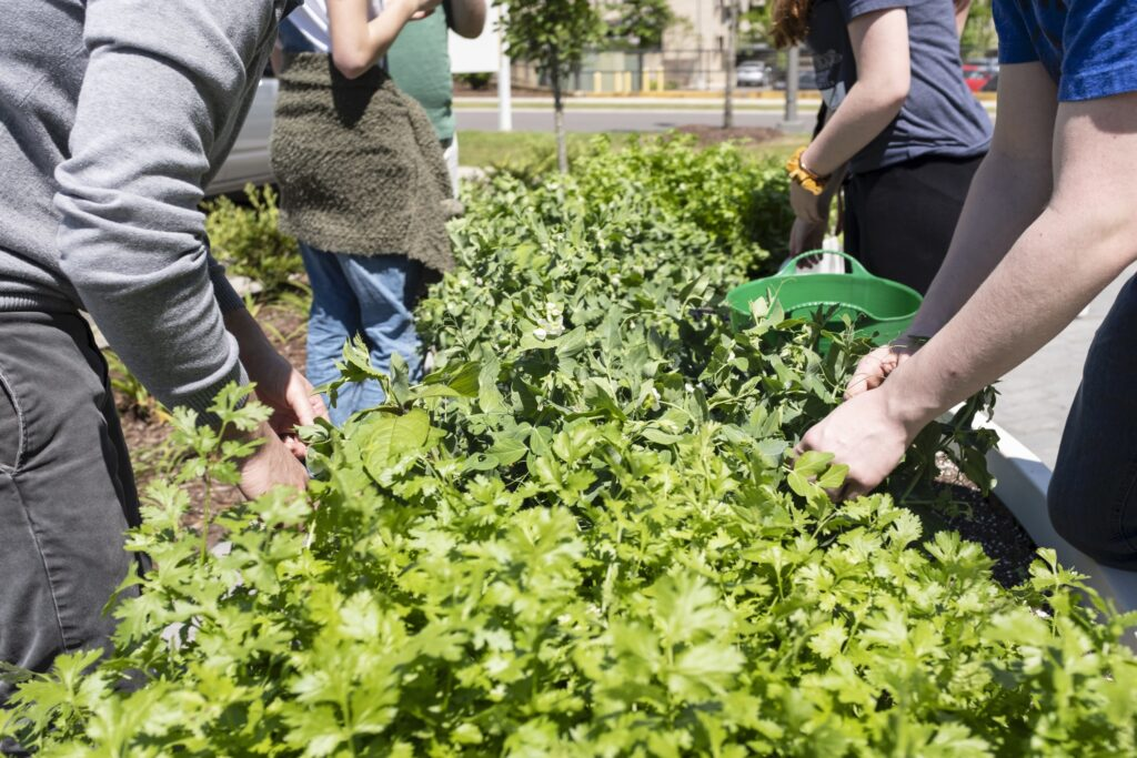 Students participating in the Memphis Big Green program prepare to harvest. (Photo: Big Green)