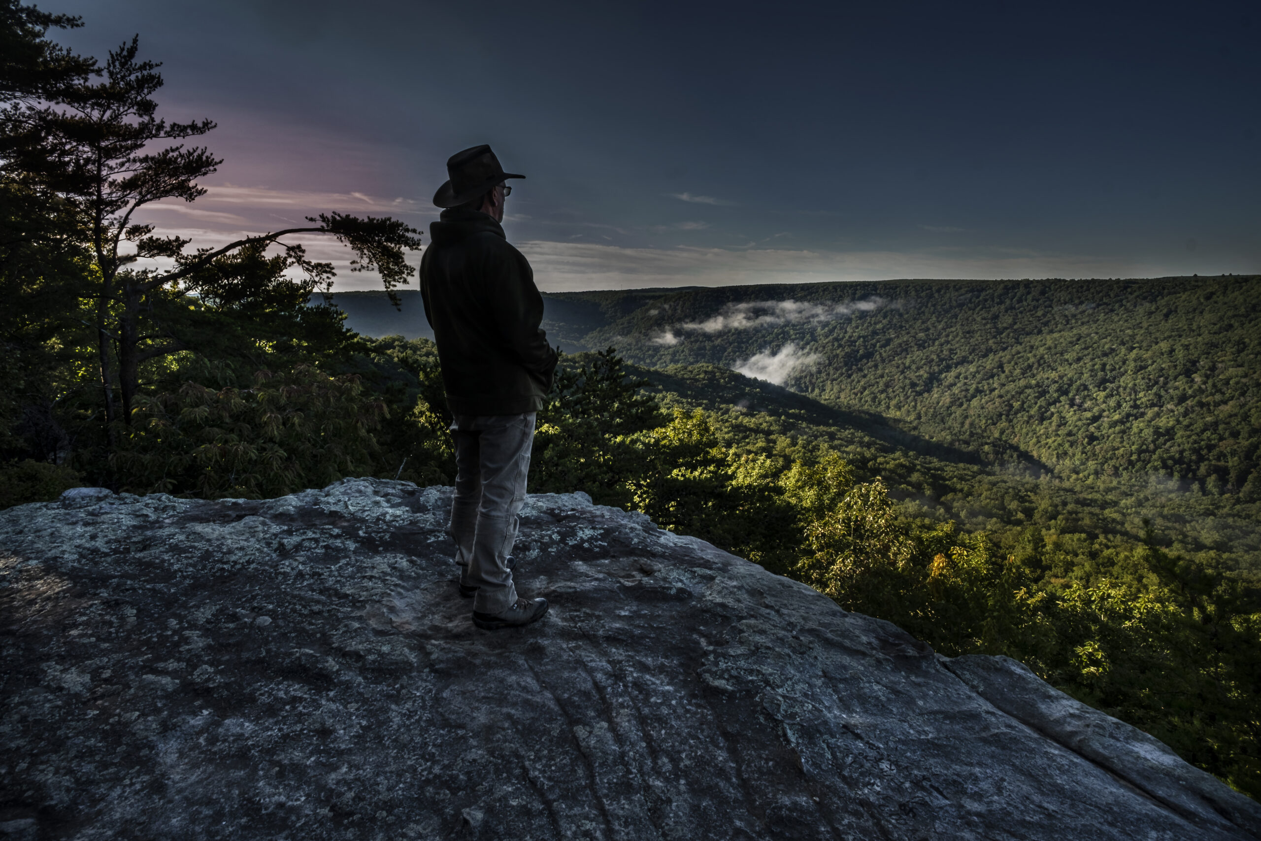 Tennessee Wildlife Resources Agency plans to raze old-growth forest